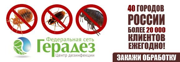 Заказать уничтожение тараканов в квартире или доме
