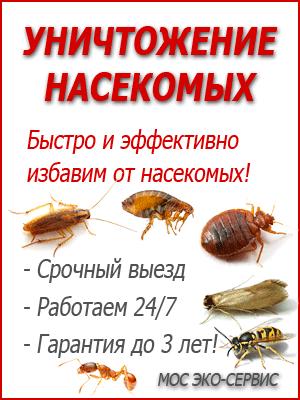 уничтожение паразитов магнитогорск
