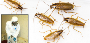 Подробно про обработку помещений от различных насекомых: важные нюансы