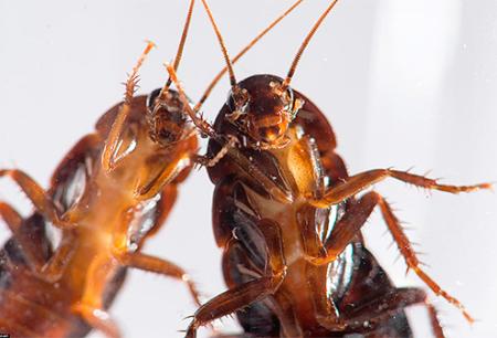Какое средство от тараканов самое эффективное?