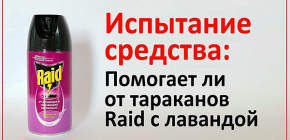 Редкий по убойности эффект: тестируем аэрозоль Рейд на тараканах