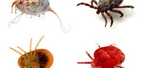 Различные виды клещей и их фотографии