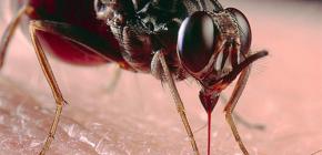 Об укусах насекомых и их лечении