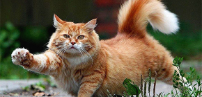 Как быстро и безопасно вывести блох у кота