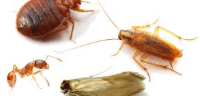 Как вести борьбу с домашними насекомыми в квартире