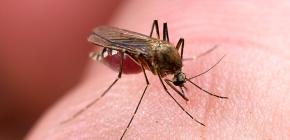 Средства для защиты от укусов насекомых: обзор эффективных вариантов