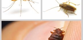 Инсектицидные средства от насекомых в доме: обзор препаратов