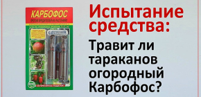 Посмотрим, эффективен ли обычный огородный Карбофос против тараканов