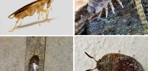 Виды насекомых, которые могут жить в квартире, и их фотографии