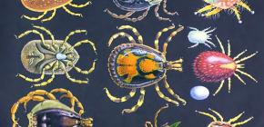 Характеристика отряда Паразитиформных клещей