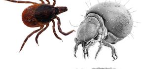 Клещи-паразиты: интересные факты