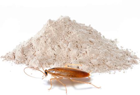 Порошки для уничтожения тараканов: обзор эффективных средств