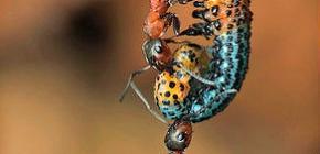 Сколько весит муравей и какую массу он может поднять
