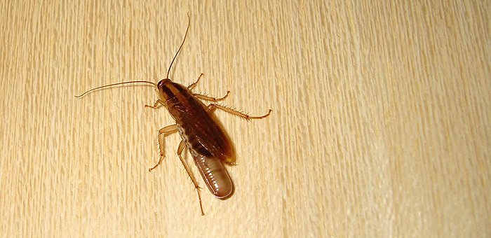 Муравьи это паразиты или насекомые