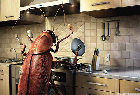 Чего боятся тараканы