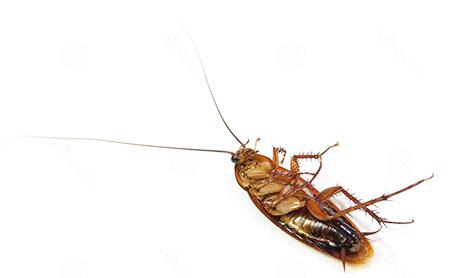 Фото К чему снятся тараканы и клопы сонник