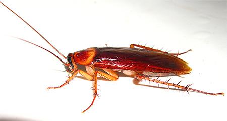 как узнать что нет таракана