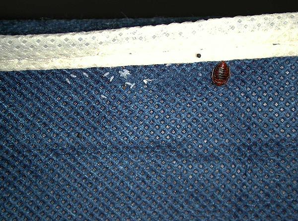 Паразитов можно принести в дом на одежде из зараженного помещения.