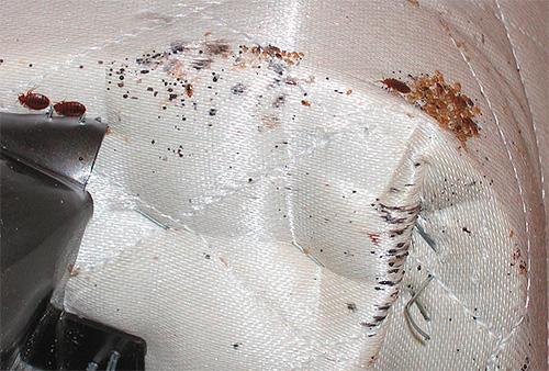 Если клопы обнаружены в диване, то его можно выморозить на улице или обработать горячим паром