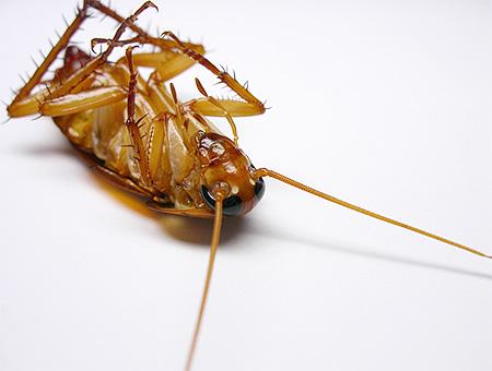 Мороз убивает тараканов и их яйца