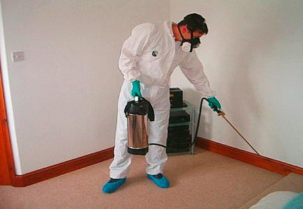 Борьба с тараканами в домашних условиях
