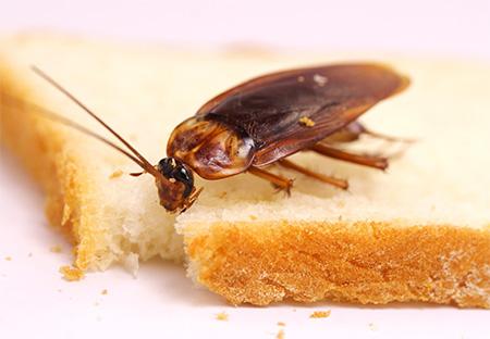 Избавляемся от тараканов в квартире