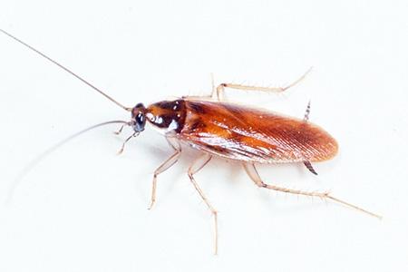 Тараканы приходят в квартиру от соседей