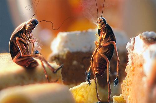 Важно ограничить насекомым доступ к остаткам пищи