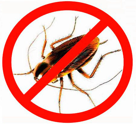 Боремся с тараканами