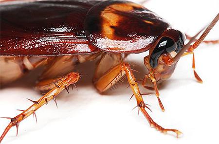 Уничтожаем тараканов в квартире