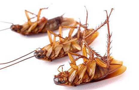 Мертвые тараканы