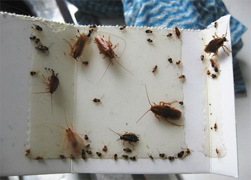 Липкая ловушка для тараканов