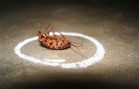 Традиционные средства от тараканов пока что имеют больший эффект