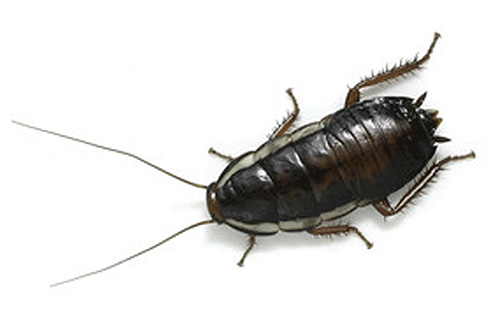 К чему снится большой таракан на кровати фото