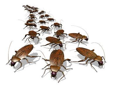 Если снится большое количество мелких тараканов