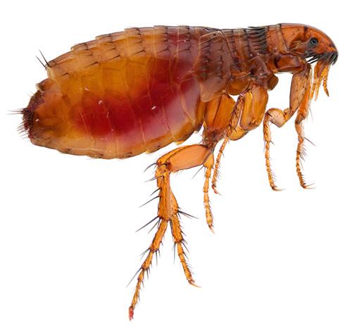 избавление от паразитов в организме человека