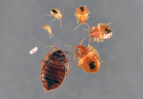 травить паразитов человеку