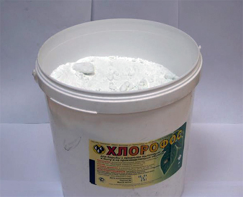 Хлорофос: инсектицидный порошок