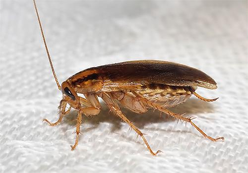 Гипотезы о том, куда делись тараканы