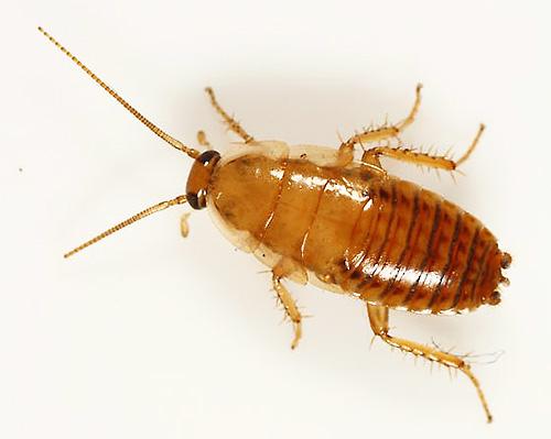 Обзор средств для обработки квартиры от тараканов