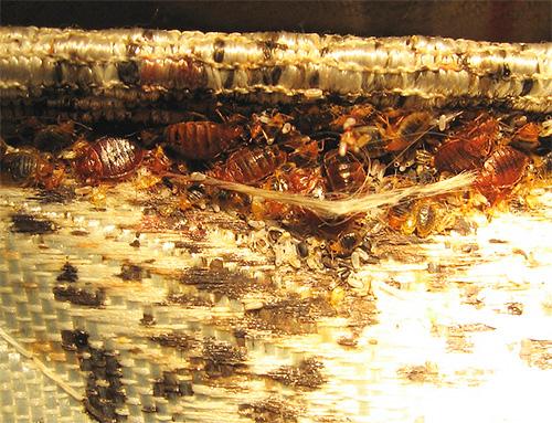 Аэрозоль Чистый Дом не оставляет пятен на обивке мебели и матрасах