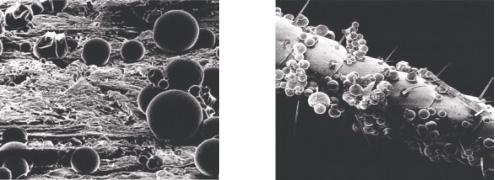 Фотографии: слева - микрокапсулы на обработанной поверхности, справа - на усиках таракана