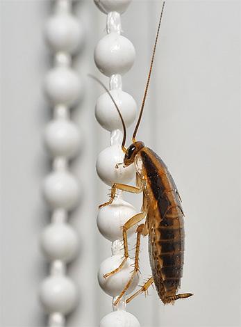 Эффективность препарата Get может превосходить таковую у устаревшего средства от тараканов Гетт