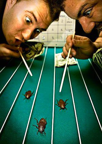 Во время забега разрешается подгонять таракана