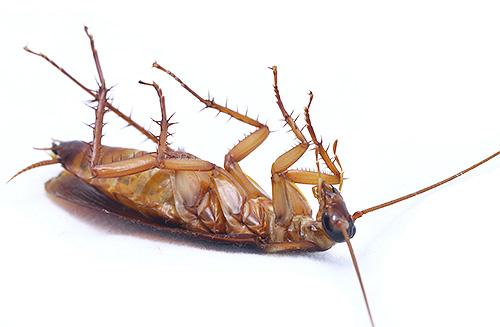 Преимущество аэрозолей - высокая скорость уничтожения насекомых
