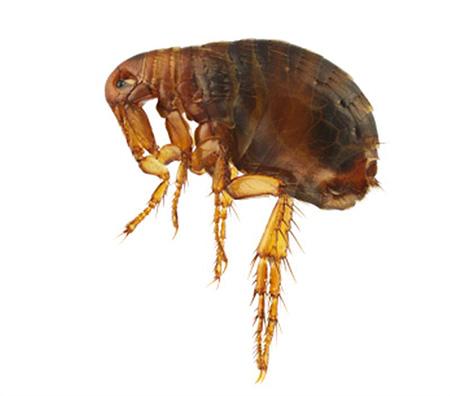 как протравить паразитов в организме