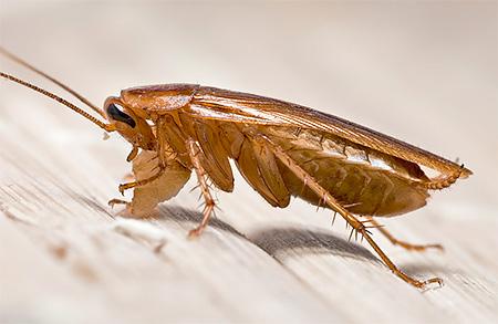 Существует несколько форм выпуска средств Раптор от тараканов