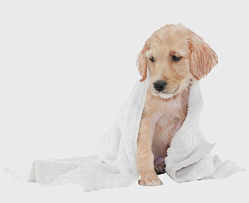 Любой шампунь от блох у собак имеет свои достоинства и недостатки