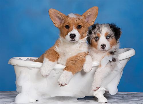 Для щенков нужно подбирать максимально щадящий шампунь