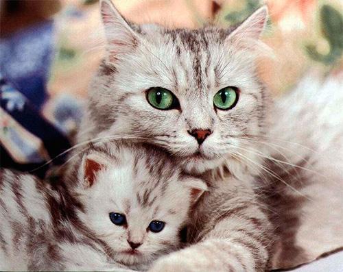 Выбираем наиболее эффективное средство от блох для кошек и котят